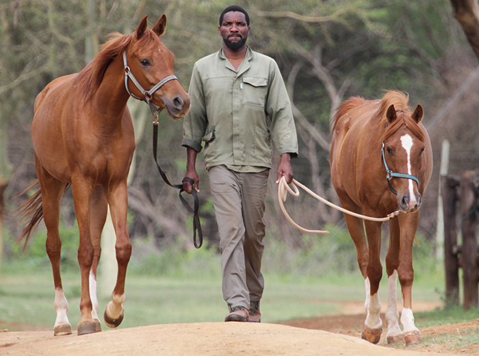 simon-mthembu-head-groom-with-two-of-the-pakamisa-horses