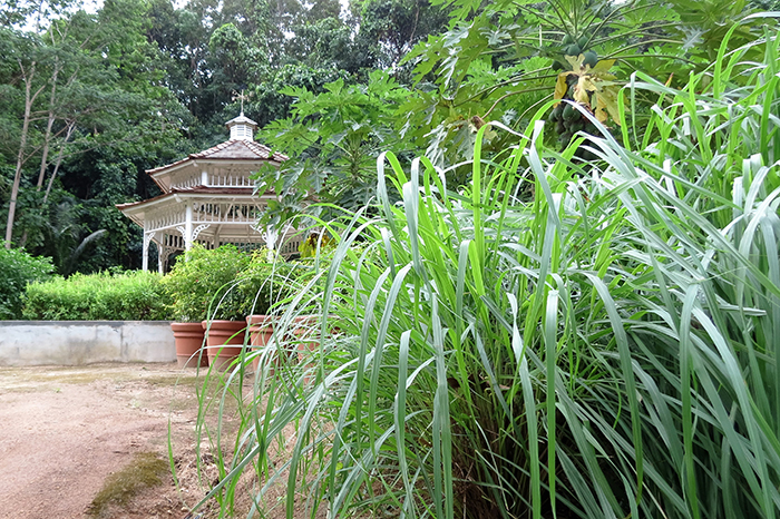 the-pagoda-in-the-organic-garden-is-surrounded-by-a-selection-of-fruit-vegetables-and-herbs