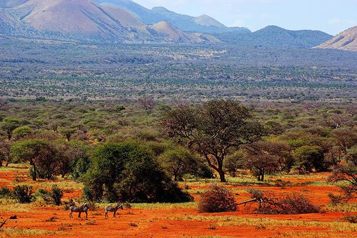 Tsavo West Landscape (2)