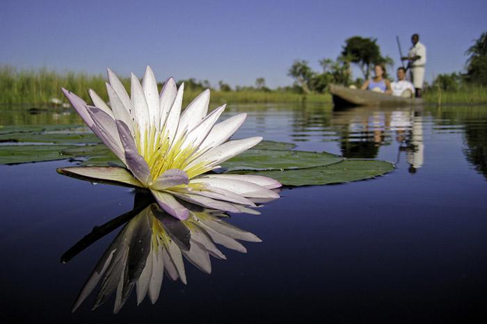xigera-water-lilly