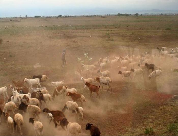 agriculture-kenya