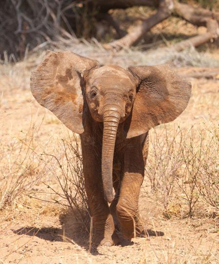 baby-elephant-samburu
