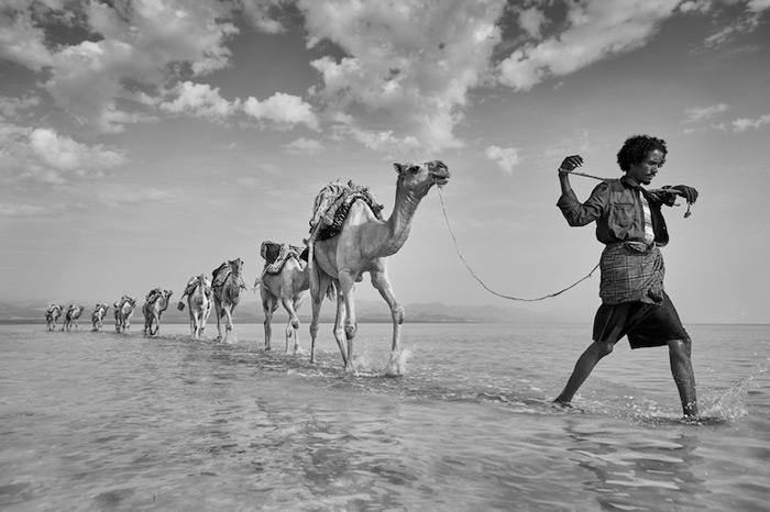 camel-train-danakil
