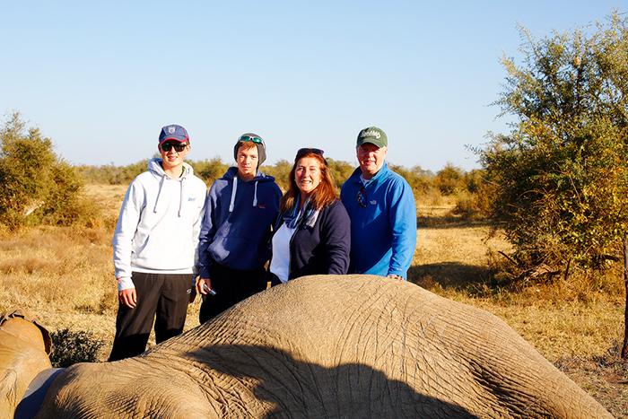 darted-elephant