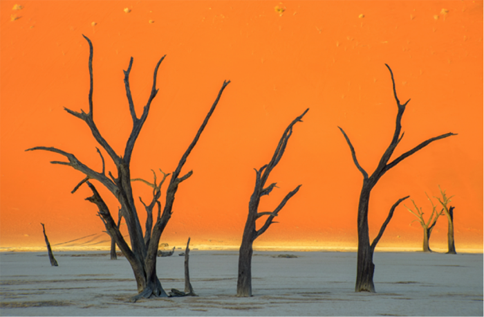 dead-vlei-trees