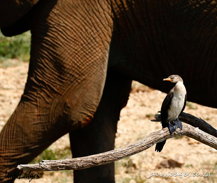 elephant-and-bird