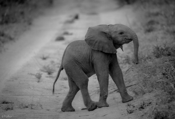 elephant-baby-dex-kotze