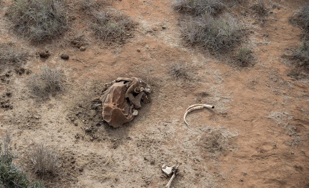 elephant-carcass-tsavo
