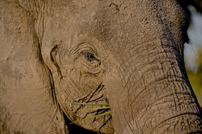 elephant-close-up-dex-kotze