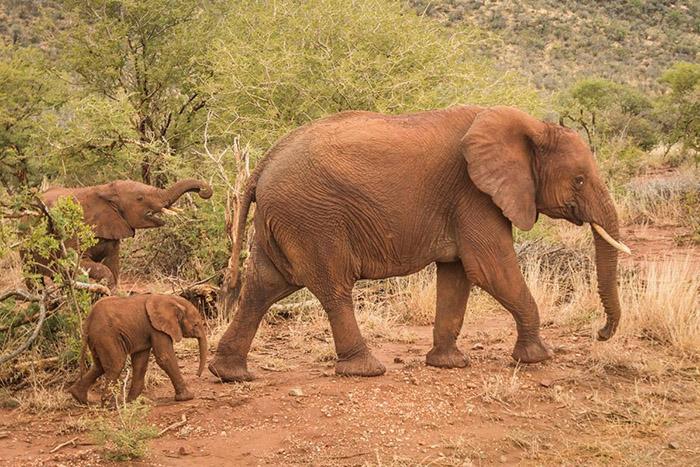 elephant-family-in-madikwe