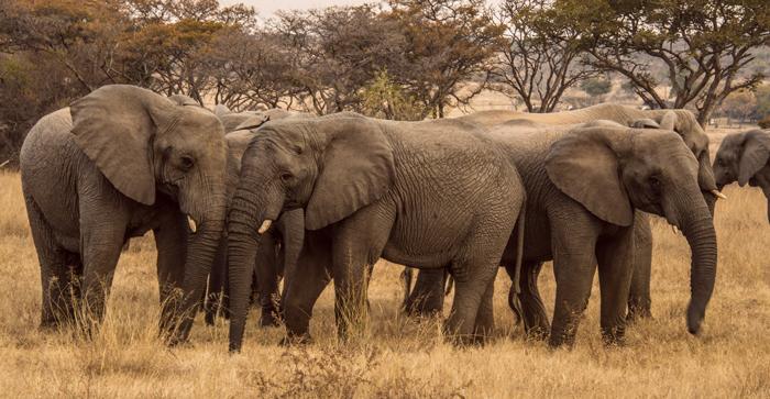 elephant-herd-dex-kotze