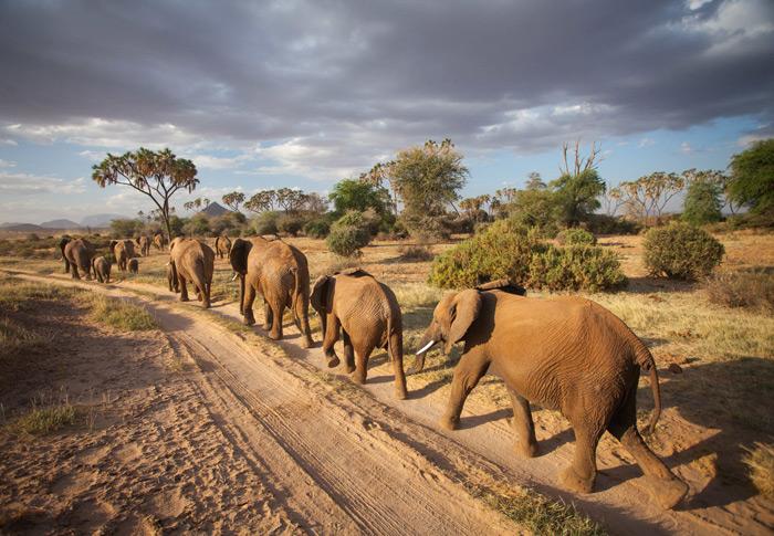 elephant-herd-samburu