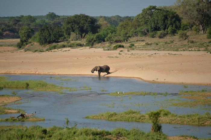 elephant-landscape-dex-kotze