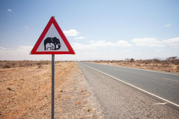 elephant-road-sign