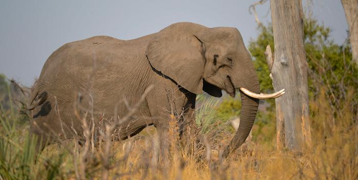 elephant-side-profile-dex-kotze