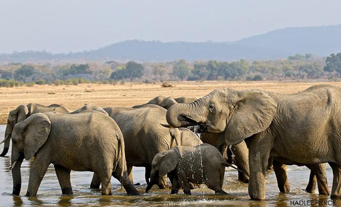 elephants-at-the-waterhole