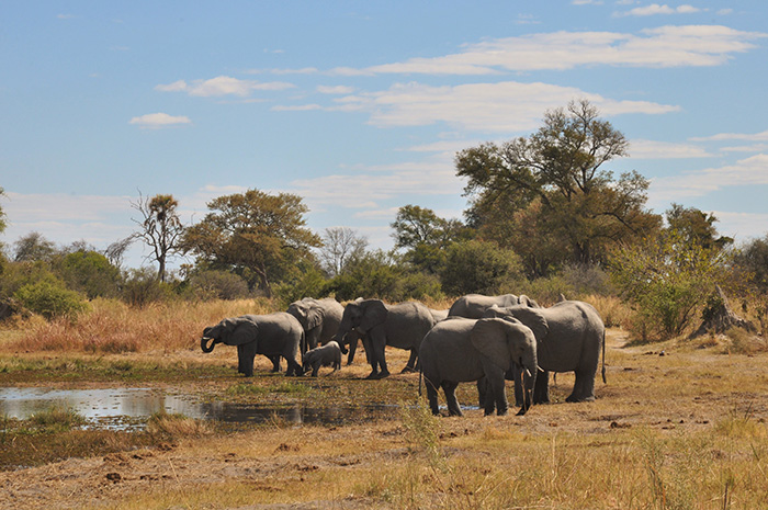 elephants-at-the-watering-hole