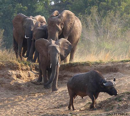 elephants-coming-to-the-waterhole