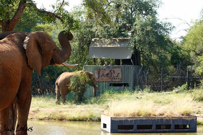 elephants-eating