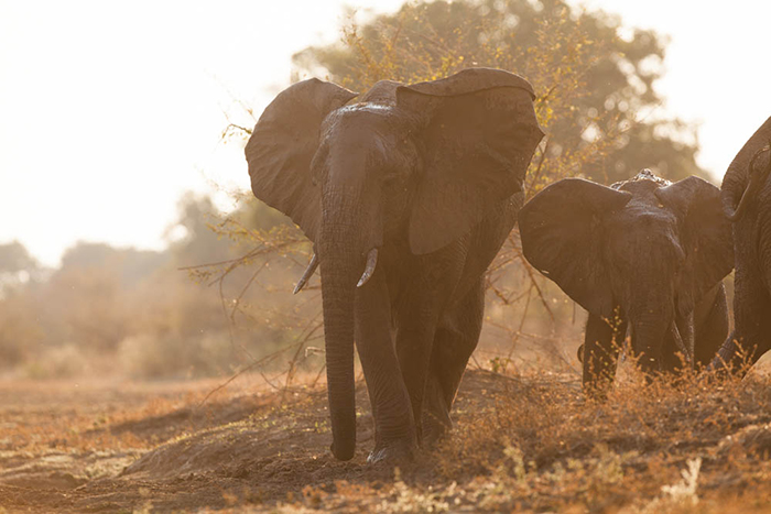 elephants-from-the-hide