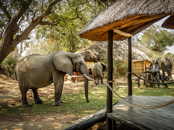elephants-in-camp