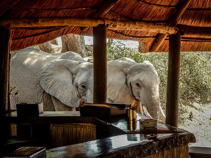 elephants-in-the-bar