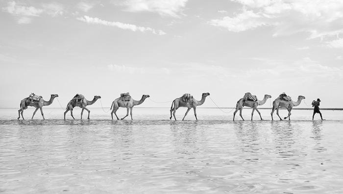 ethiopia-camels