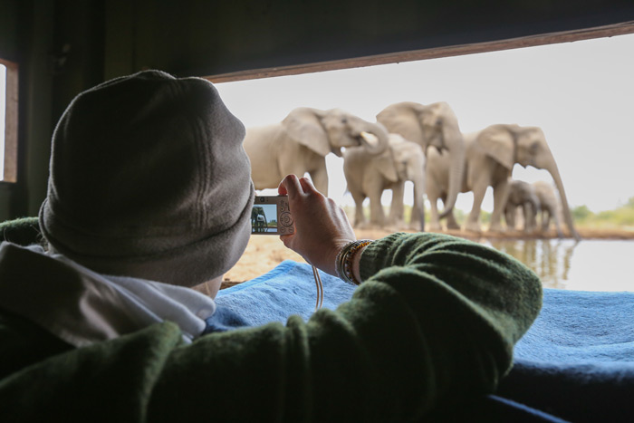 eye-level-elephants-photography-app