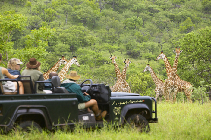 game-viewing-at-leopard-mountain