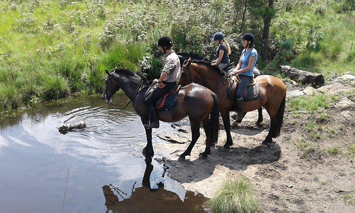 horses-stopping-by-the-warer