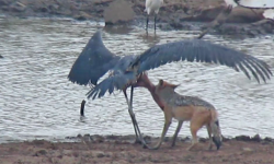 jack-and-stork