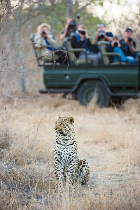 kruger-leopard-photographers