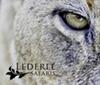 Lederle Safaris