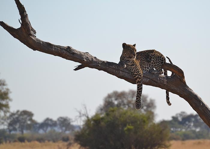leopard-sighting