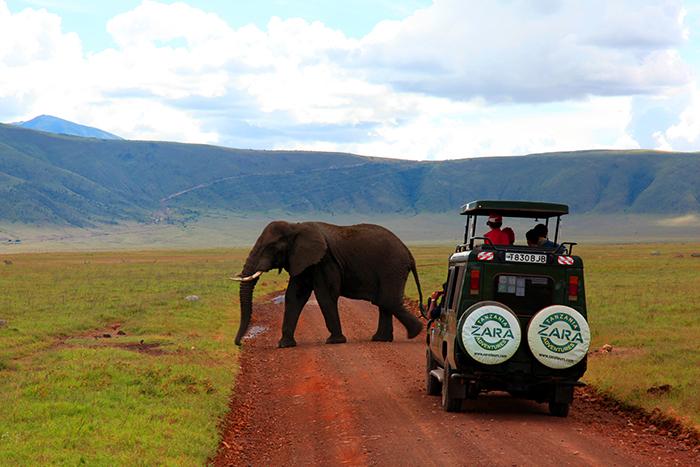 on-safari-in-kenya