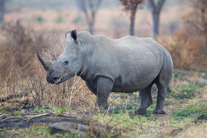rhino-michael-lorentz