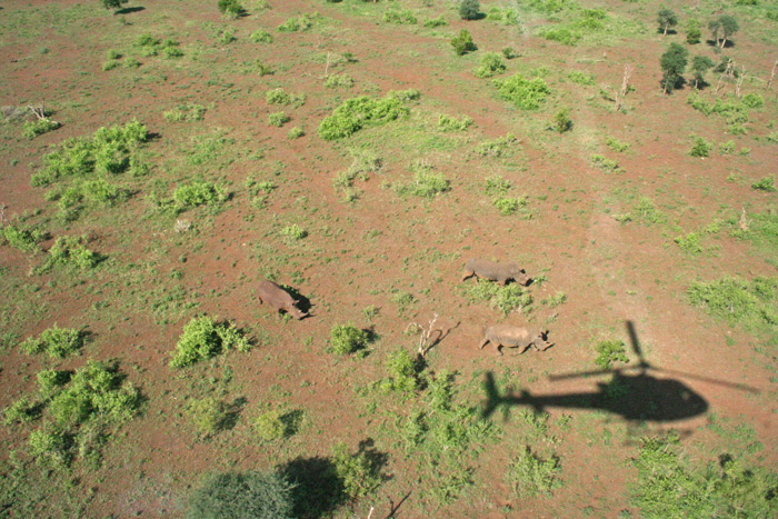 rhinos-from-the-air-helicopter-janine-avery