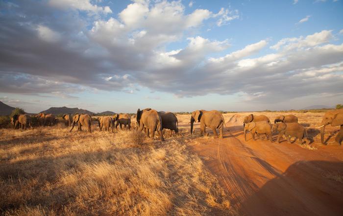 samburu-elephant-herd