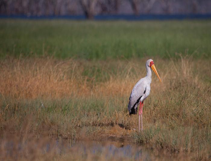 stork-lake-nakuru