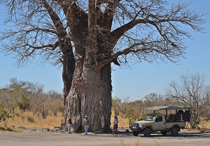 under-a-baobab