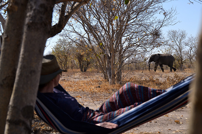 watching-the-elephants-go-by