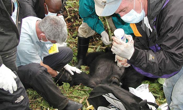 work-of-gorilla-doctors