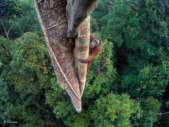 tim-laman_wildlife-photographer-of-the-year-grand-title-winner