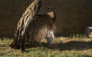 charlie-hamilton-james-vulture