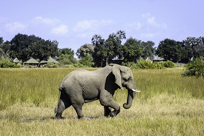 elephant-watching-in-Amakhala-Reserve
