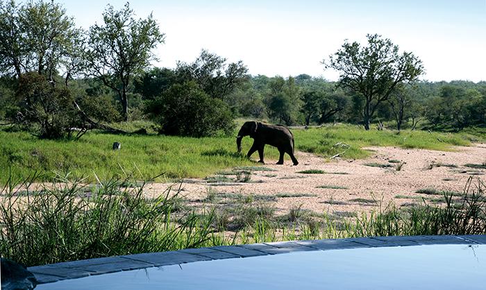 elephant-watching-in-okovango-delta
