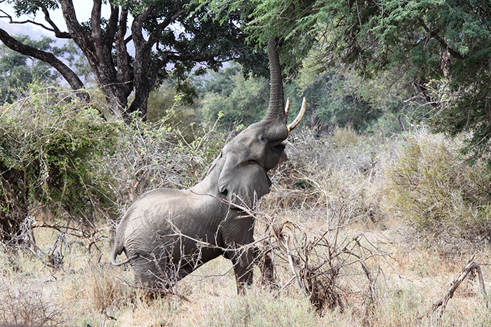 elephant-watching-in-Tarangire-National-Park