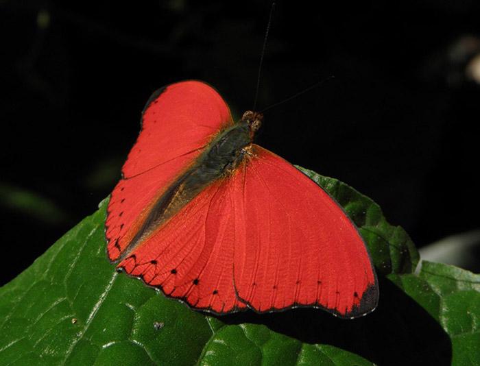 Kakamega-Forest_Butterfly