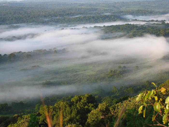kakamega-forest_morning-mist