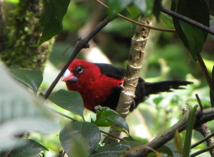 Kakamega-Forest_birds